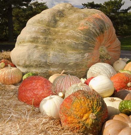 Display of giant pumpkin with colorful gourds surrounding it photo