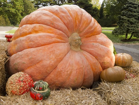 Giant pumpkin display with gourds surrounding it Stock Photo