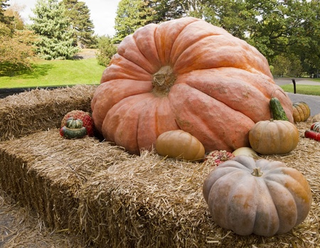 Giant pumpkin display with gourds surrounding it Stock Photo - 11961329