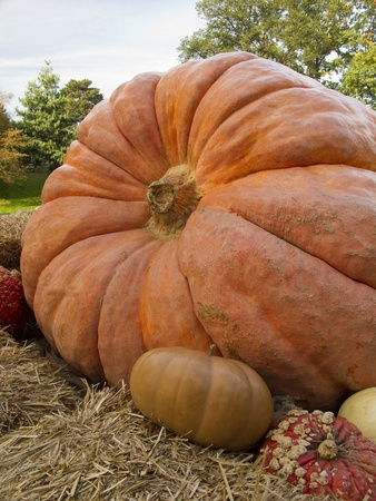 Giant pumpkin display with gourds surrounding it photo