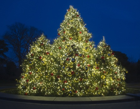 Outdoor Christmas Tree at Dusk, lit with bright colorful lights