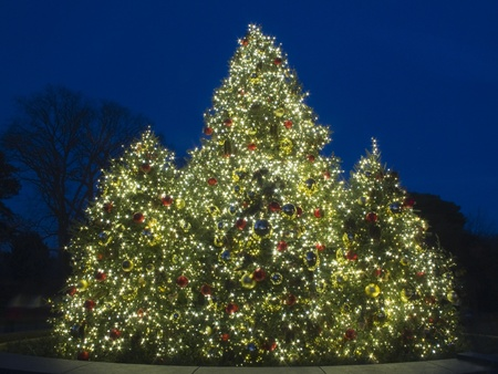 Outdoor Christmas Tree at Dusk, lit with bright colorful lights photo