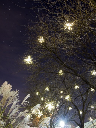 Tree Branches lit with Winter White Lights, Starry cloudscape in background