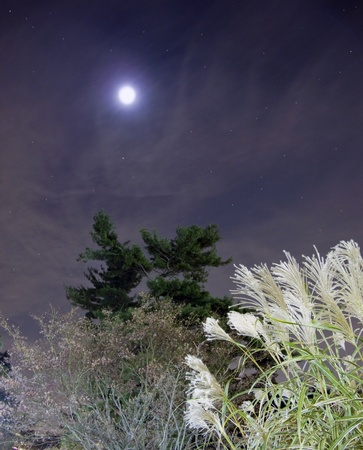 Night Time Sky with clouds and stars, glowing plants and trees in foreground Stock Photo