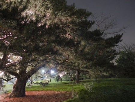 Old tree with dramatic lighting at night Stock Photo