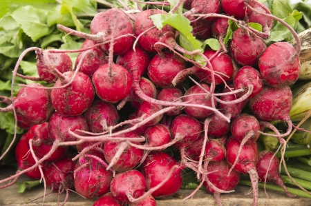 unwashed: Bunch of organic unwashed radish, roots intact Stock Photo