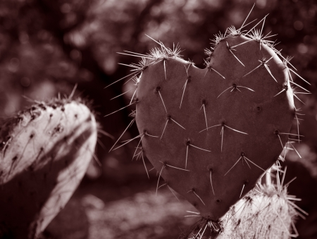 Cactus Leaf in the Shape of a Heart  rim lighting, red duotone  photo