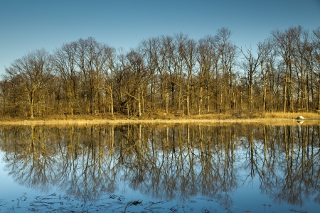 Row of bare trees reflected in still body of water  Sunset