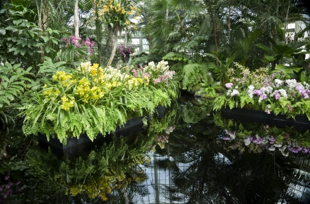 Plants on Display in Pool of Water in Greenhouse photo