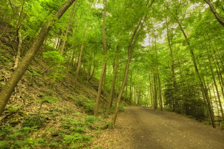 Hiking Path in a Forest - Green Leaf Canopy photo