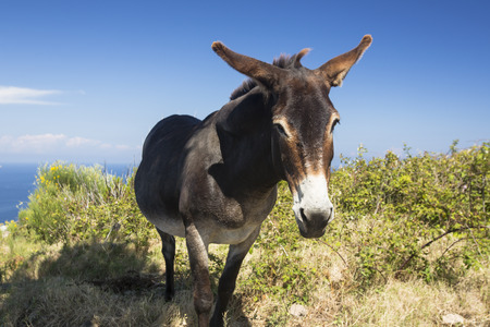 Donkey isolated on a grassy field