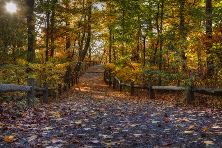 Forest Trail in Autumn. Fall foliage colors Stock Photo