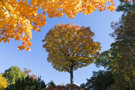 Isolated trees in shadow framed with yellow autumn leaves at the top Stock Photo