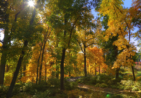 Autumn Forest scene with sunlight rays and colorful leaves Stock Photo