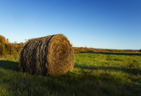 Round bale of hay or straw in a green field Stock Photo