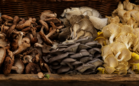 Fresh Harvested mushrooms in a basket - shiitake, oyster and chanterelle. Shallow depth of field Stock Photo