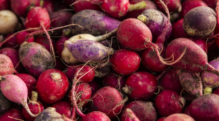 Random assortment of bright and multicolored radishes