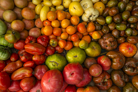 Colorful array of tomatoes Stock Photo