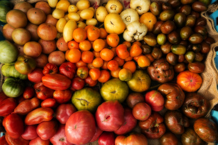 Colorful array of tomatoes.