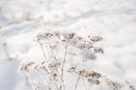 Winter christmas background with shiny snow Imagens