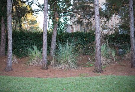 serine: Spring trunks trees in line in the park. Spring time in nature