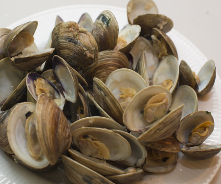 Steamed Clams in white dish Ready to Eat