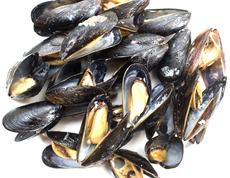 Fresh cooked mussels open shell isolated on white background