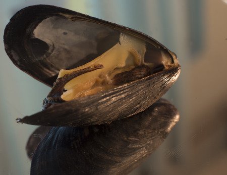 Closeup reflection of mussel on colored shallow background