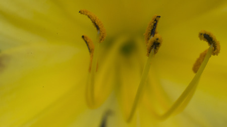 Abstract close-up macro of yellow flower on shallow background. Empty space for text