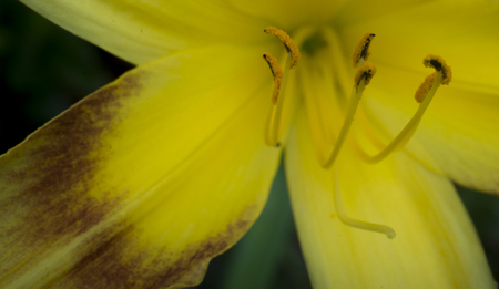 Abstract close-up (macro) of yellow flower background