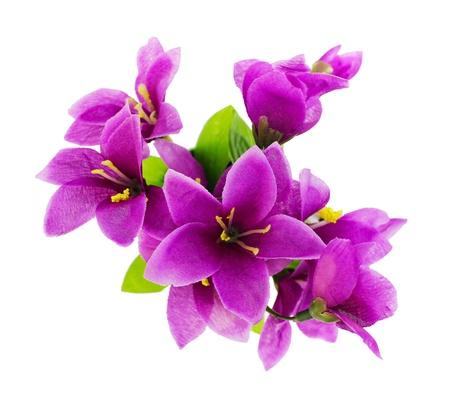 flores moradas: Purple flores artificiales se a�sla en un (vista superior) de color blanco
