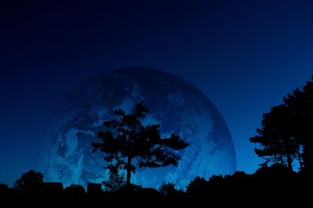 siluette tree in earth background