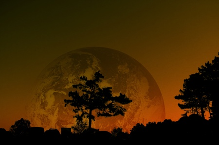 siluette tree in earth background  photo