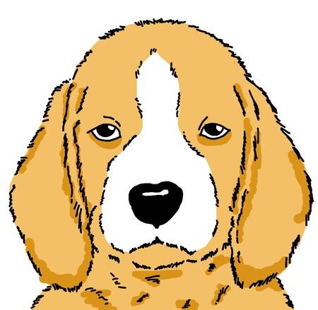 drawing dog Beagle   photo