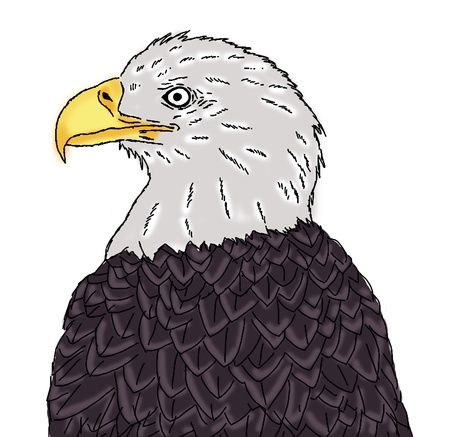 cross hatched: eagle head painting