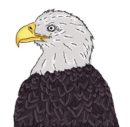 eagle head painting Stock Photo - 13749510
