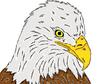 eagle - color drawing.
