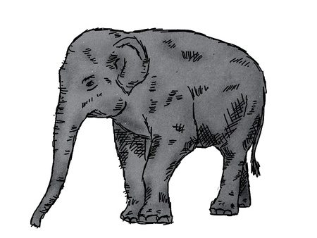 black mammoth: drawing of elephant on paper texture