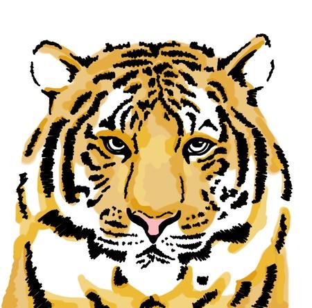 tigresa: Dibujo de tigre