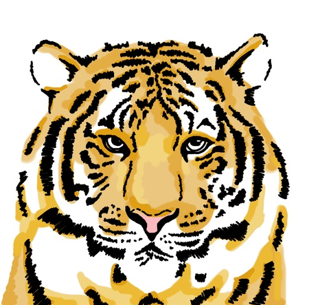 tigress: Sketch of tiger