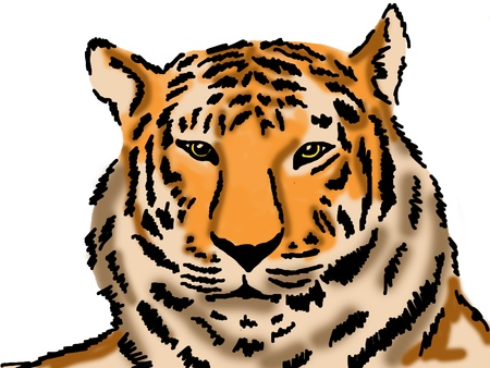 Sketch of tiger Stock Photo - 13749517