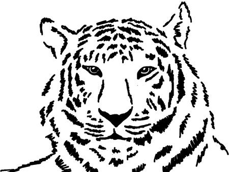 sumatran tiger: Sketch of white tiger