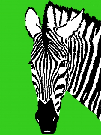 zebra drawing,green background