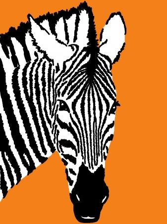 dobbin: zebra drawing,orange background