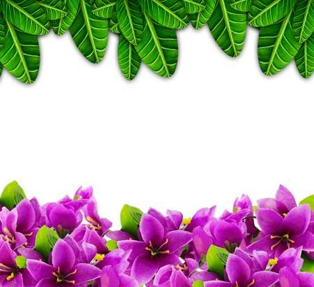 purple flower and leaf isolated on a white background  photo