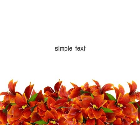 fleur d'oranger isol� sur un fond blanc