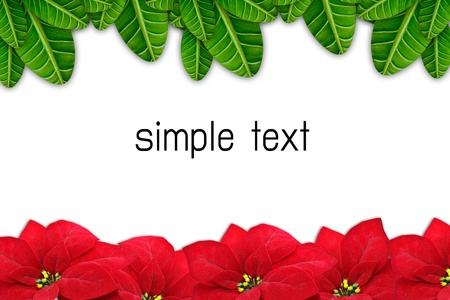 poinsettias Christmas flower Border, isolated on white backgrou  Stock Photo