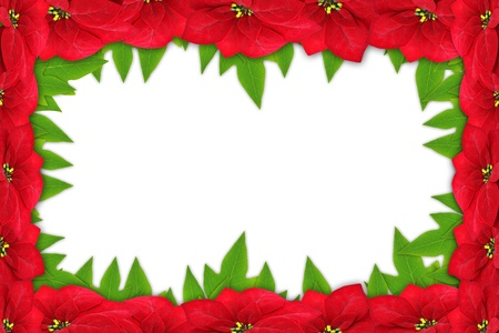Christmas Frame of Flowers - Poinsettia on White Background  photo