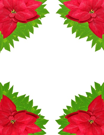 frame from christmas flowers isolated o white background  photo
