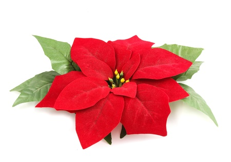Red poinsettia isolated on a white background  photo